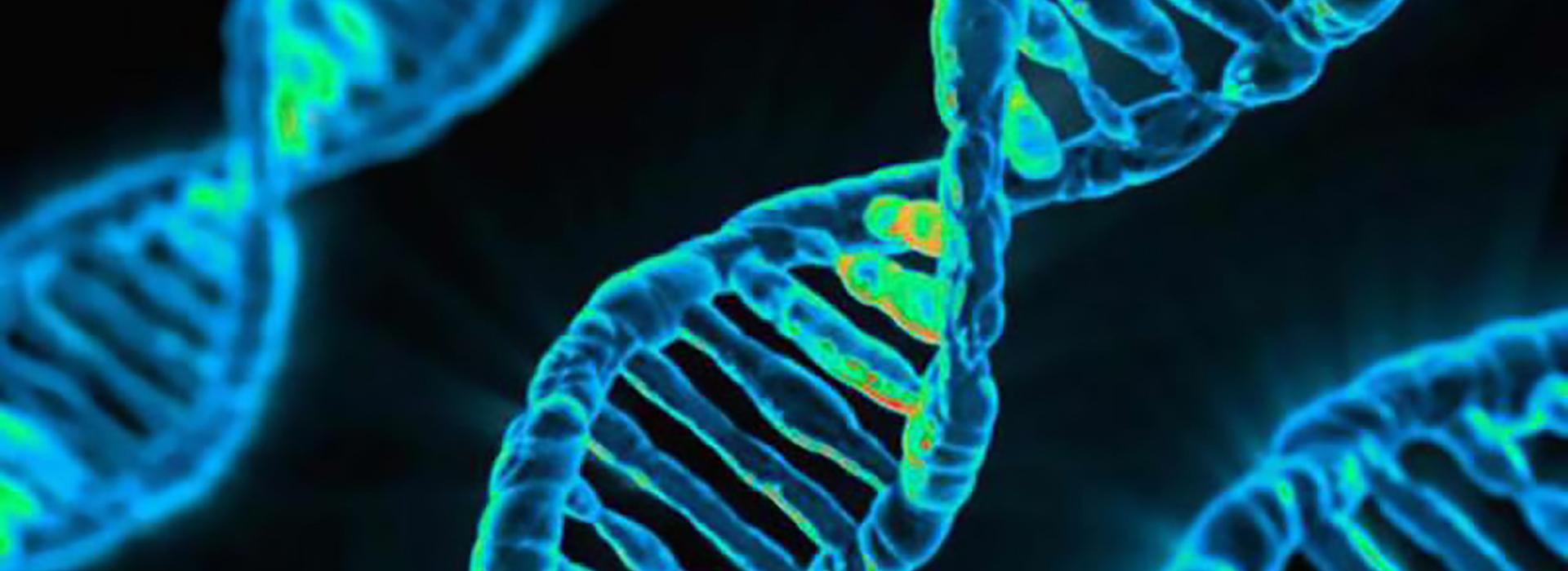 Filamento DNA